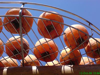 近拍做日光浴的柿子