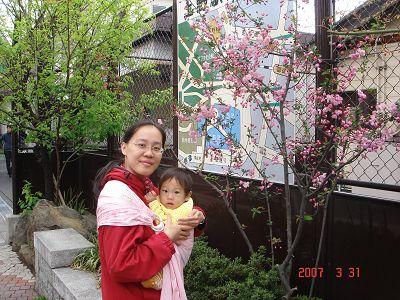 上野動物園外的櫻花