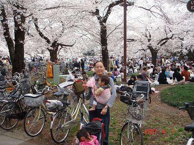 萬人野餐+櫻花盛開的公園