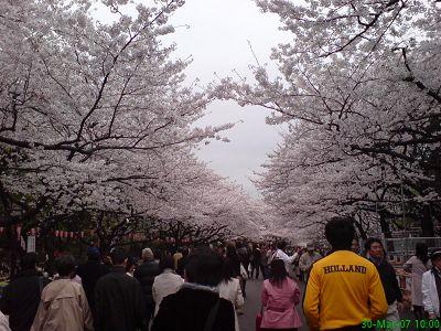 上野公園人擠人&櫻花隧道