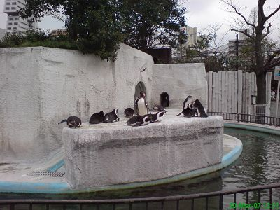 上野動物園的企鵝