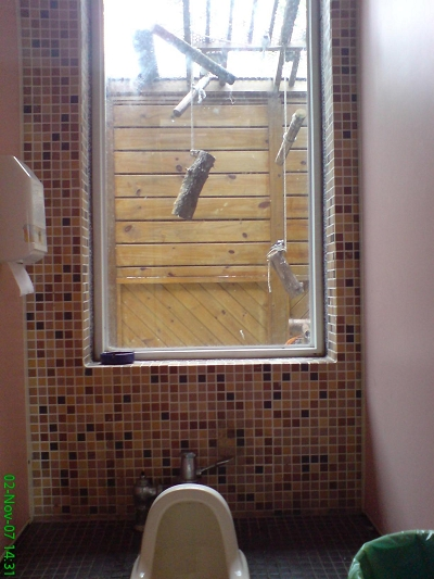 女生廁所景觀