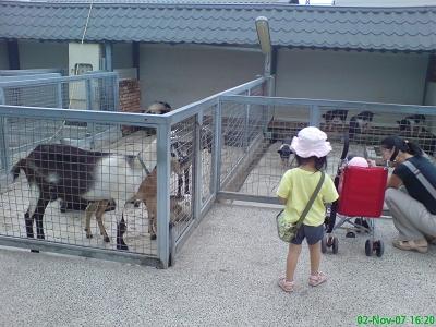 可愛動物區