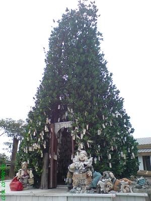 活體聖誕樹