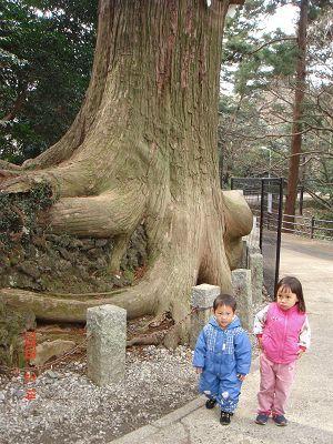 高尾山章魚老樹