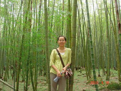 古戰場裡的竹林