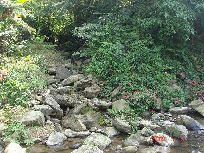 勝櫻農場旁的小溪