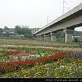 20100411台中花海10