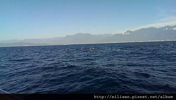 07-賞鯨10