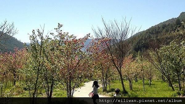 20120304武陵339