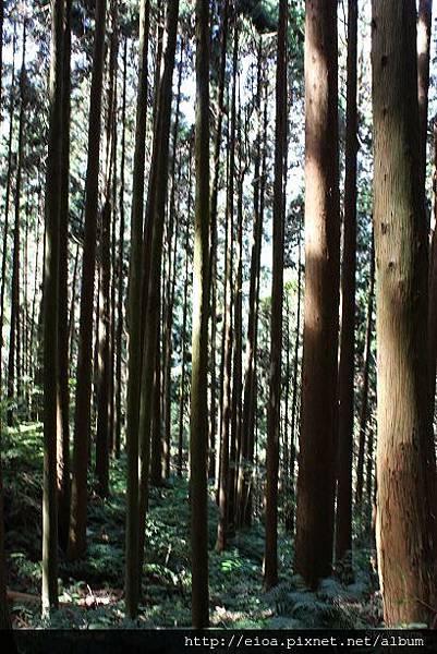 2013-11-09-吻吻露營區-阿甘露營車隊061.jpg