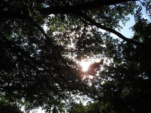 樹影篩落的光