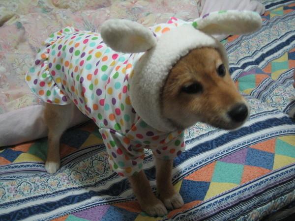 財寶兔子裝