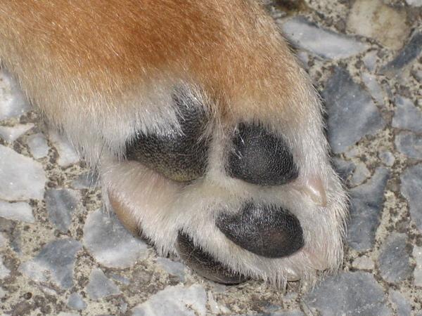 小寶的犬掌...
