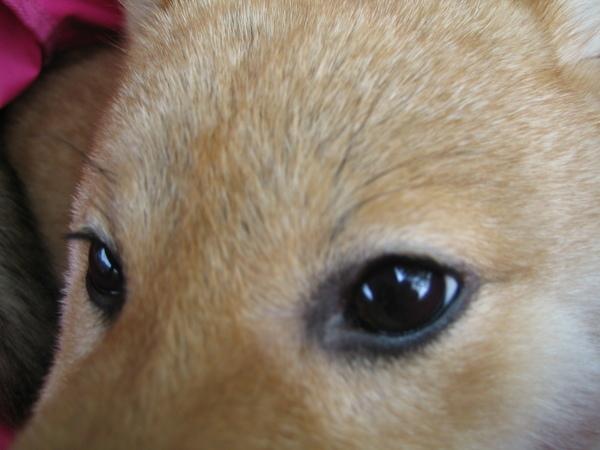 看我美麗的目睛