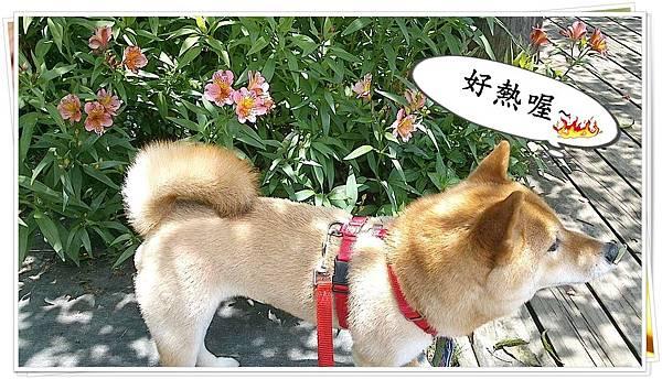 C360_2012-05-26-12-12-57_org