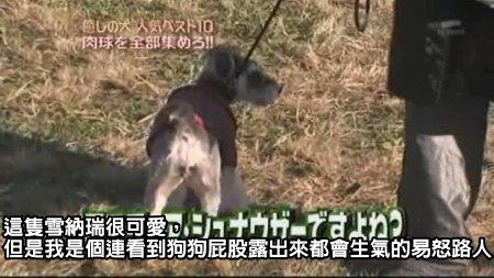 Can!Jani-20090228犬の人気ベスト10の肉球を集めろ![(009382)02-07-36].JPG