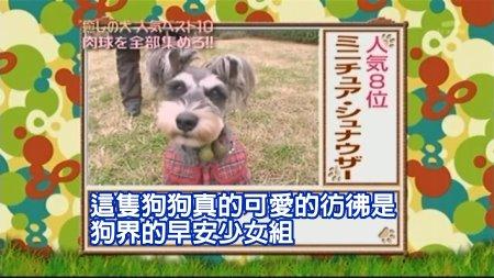 Can!Jani-20090228犬の人気ベスト10の肉球を集めろ![(009674)02-07-57].JPG