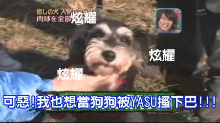 Can!Jani-20090228犬の人気ベスト10の肉球を集めろ![(009840)02-08-31].JPG