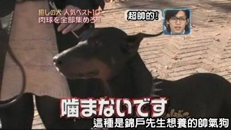 Can!Jani-20090228犬の人気ベスト10の肉球を集めろ![(017447)02-14-02].JPG