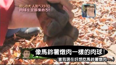 Can!Jani-20090228犬の人気ベスト10の肉球を集めろ![(018604)02-14-37].JPG