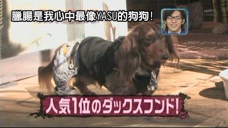 Can!Jani-20090228犬の人気ベスト10の肉球を集めろ![(020871)02-15-46].JPG