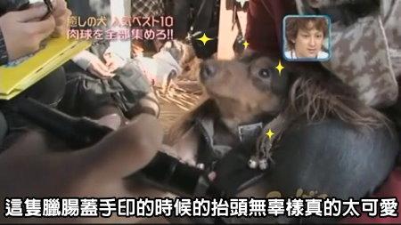 Can!Jani-20090228犬の人気ベスト10の肉球を集めろ![(021523)02-16-10].JPG