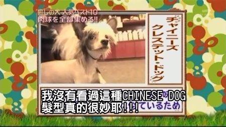 Can!Jani-20090228犬の人気ベスト10の肉球を集めろ![(029051)02-19-21].JPG