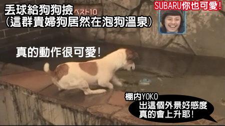 Can!Jani-20090228犬の人気ベスト10の肉球を集めろ![(030223)02-19-49].JPG