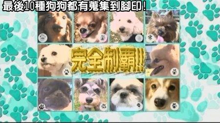 Can!Jani-20090228犬の人気ベスト10の肉球を集めろ![(040285)02-30-58].JPG