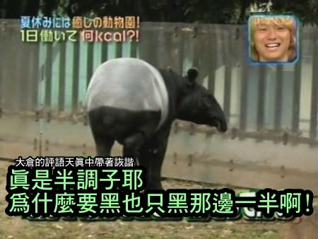 090808 Can!ジャニ 動物園勞動體驗[(005466)00-10-33].JPG