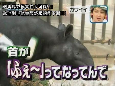 090808 Can!ジャニ 動物園勞動體驗[(007491)00-11-26].JPG