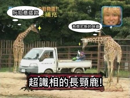 090808 Can!ジャニ 動物園勞動體驗[(018080)00-18-35].JPG