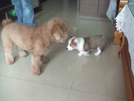 賓狗和テル(輝)