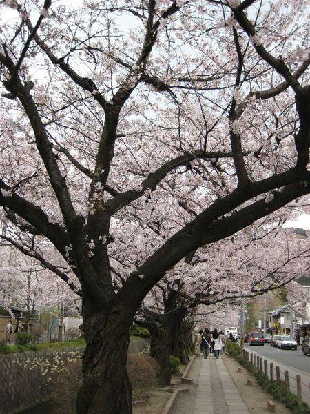 日本關西照片 357.jpg
