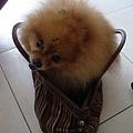 布丁看到袋子會很興奮