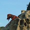 930918和平島-發現別人的臘腸狗