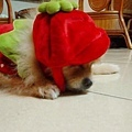 草莓布丁耍憂鬱