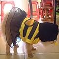 小蜜蜂布丁