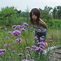 940507烏樹林-紫色小花
