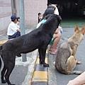 2004.05烏來老街