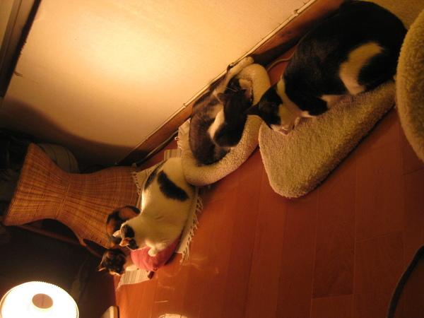 4喵喵一起睡