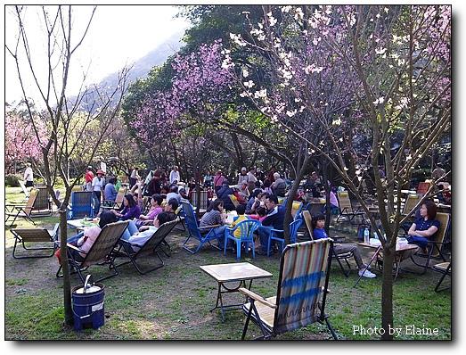 前山公園租椅子泡茶