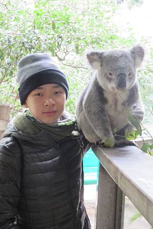 1-2014.06.15-koala park (25)