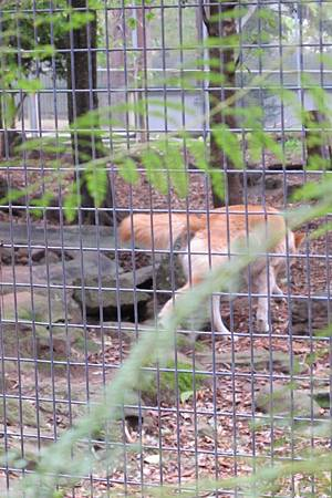 1-2014.06.15-koala park (67)
