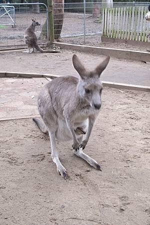 1-2014.06.15-koala park (88)