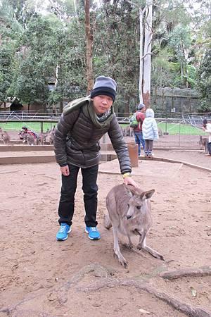 1-2014.06.15-koala park (92)