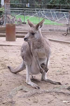 1-2014.06.15-koala park (93)