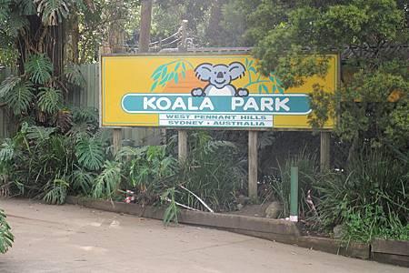 1-2014.06.15-koala park (95)