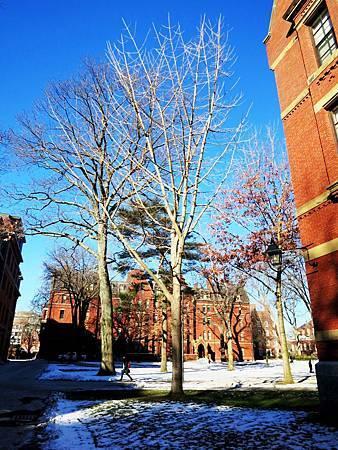 2016-01-哈佛(Harvard University)  (13).jpg